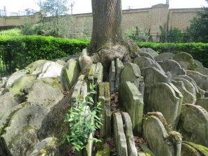 hardy-tree