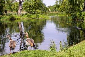 regents-park-lake